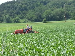 Tractor tilling the maze