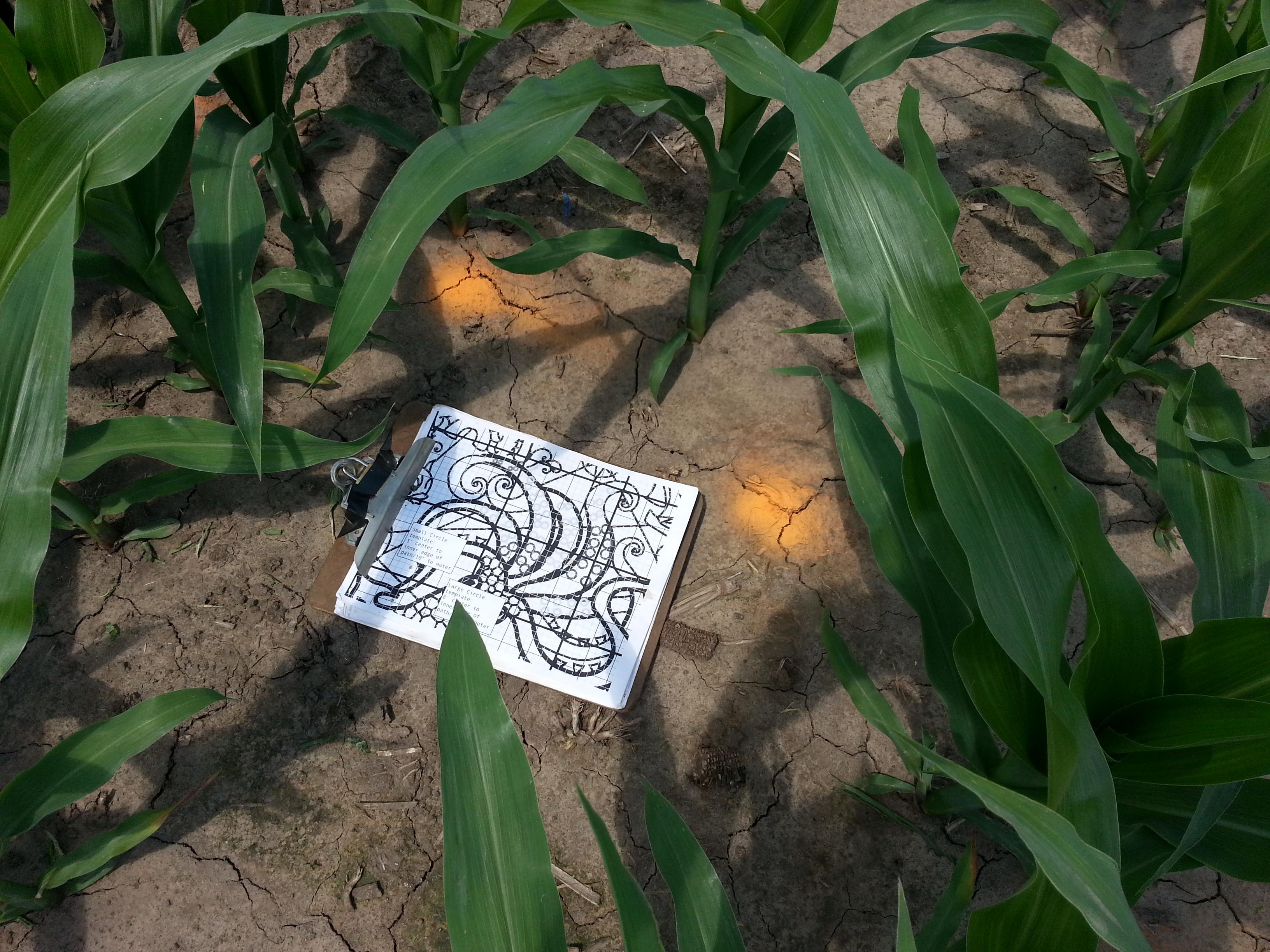 heated discussion over golden spiral treinen farm corn maze