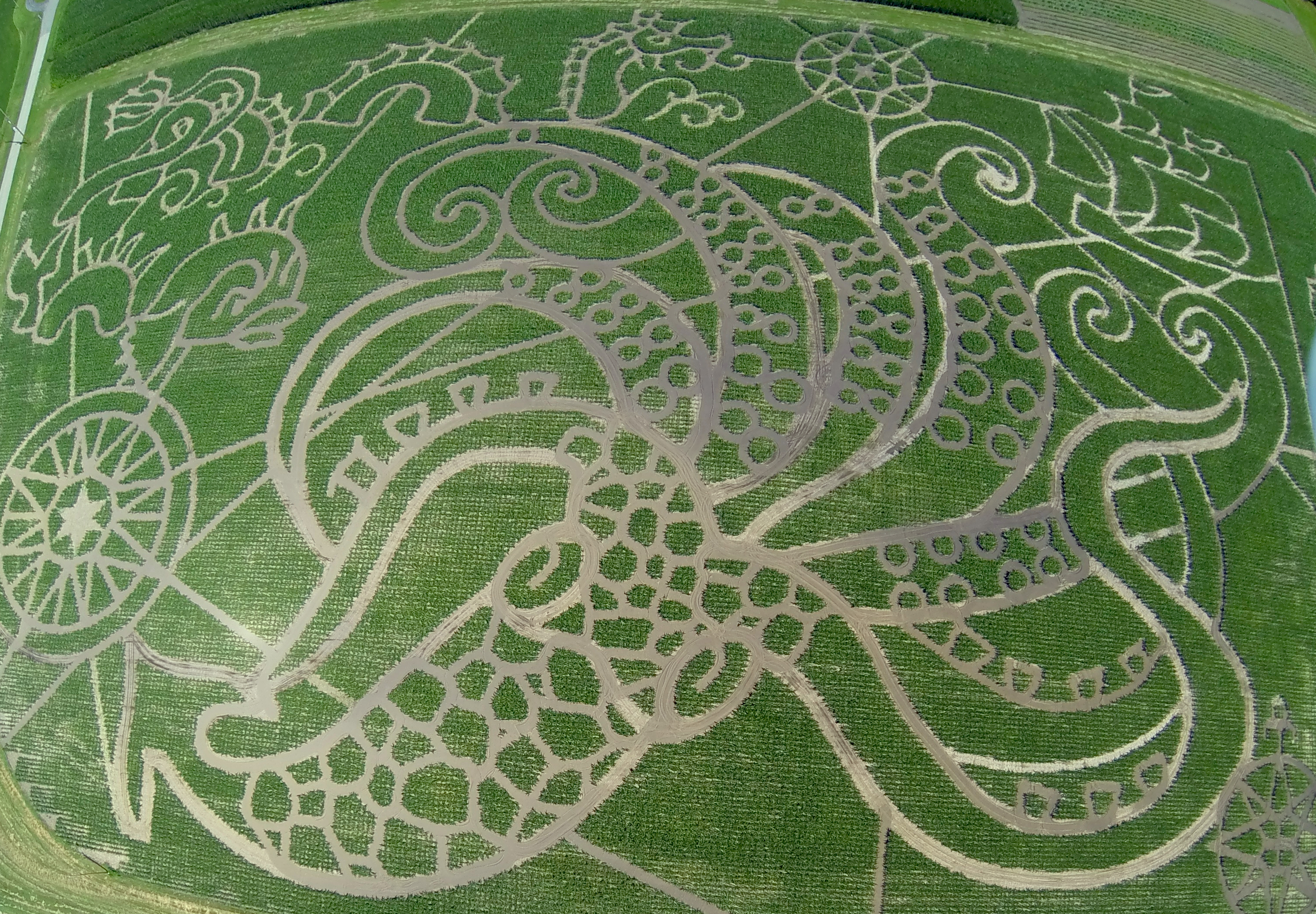 2013 Treinen Farm Sea Monster Corn Maze is complete