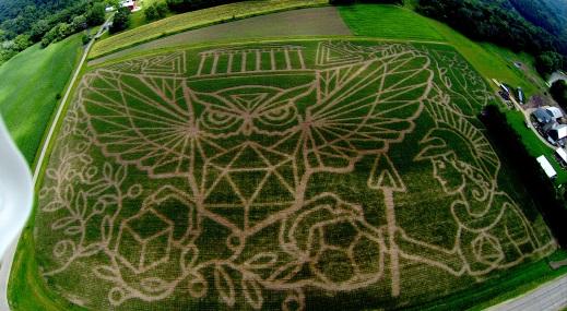 2014 Owl Maze